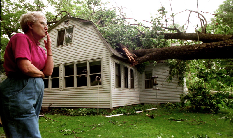 Who is responsible for the neighbors fallen tree spiritdancerdesigns Image collections